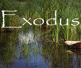 Exodus Quiz