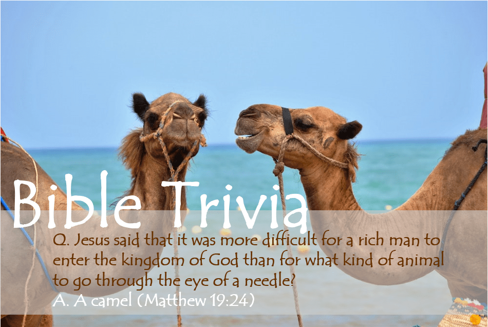 Bible Trivia 105 Capture