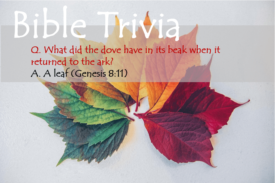 Bible Trivia 107 Capture