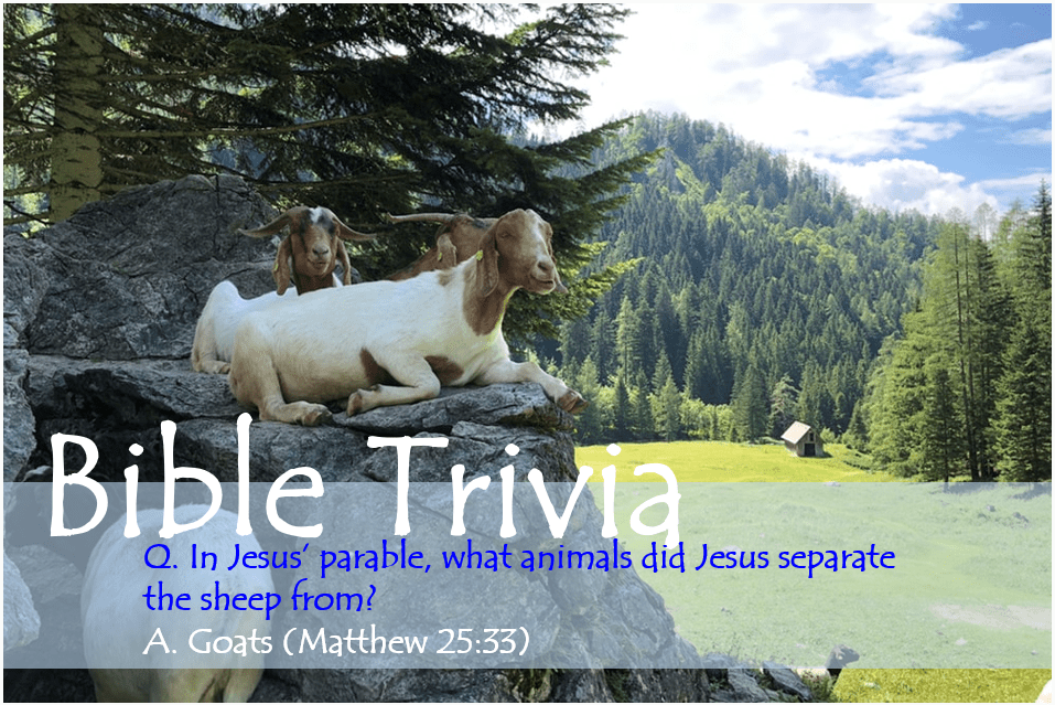 Bible Trivia 201 Capture