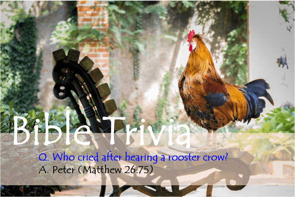 Bible Trivia 203 Capture