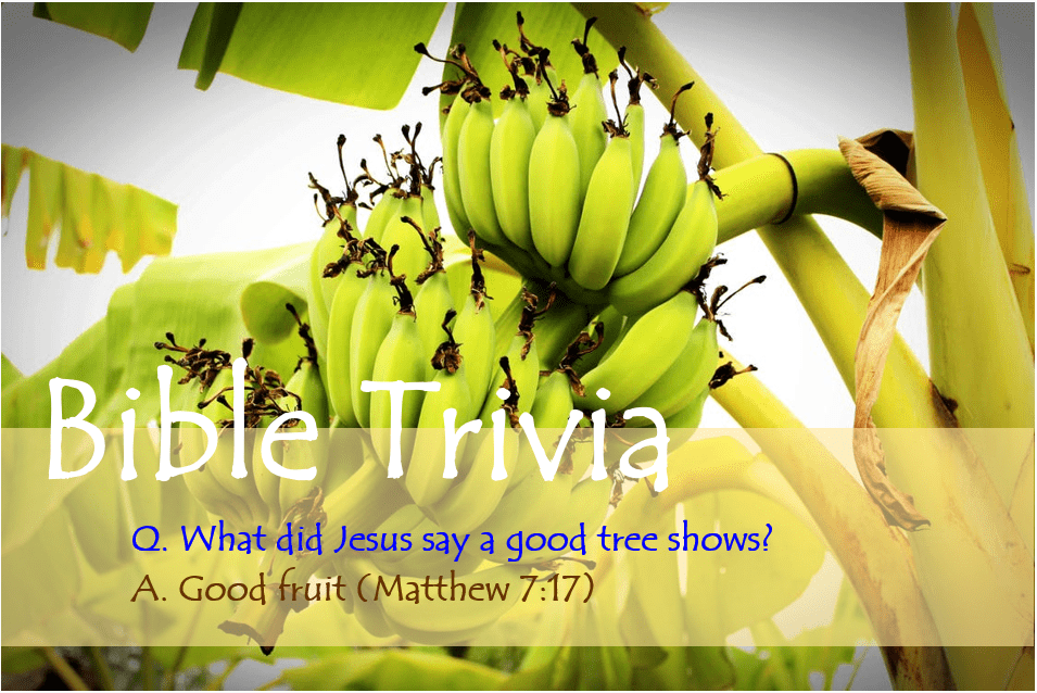 Bible Trivia 301 Capture