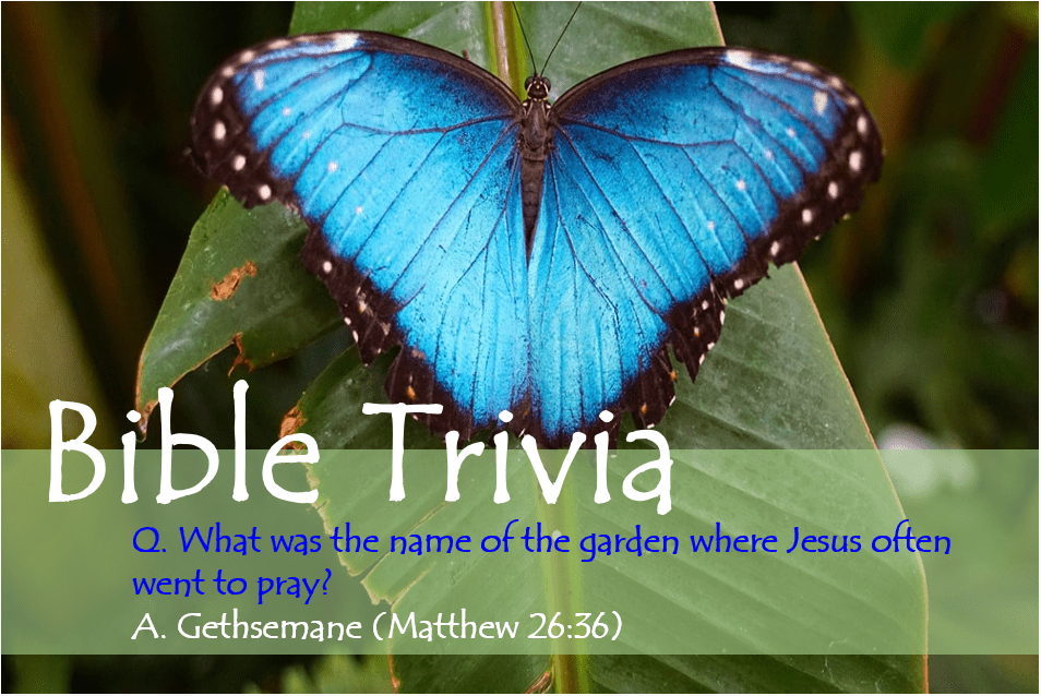 Bible Trivia 303 Capture