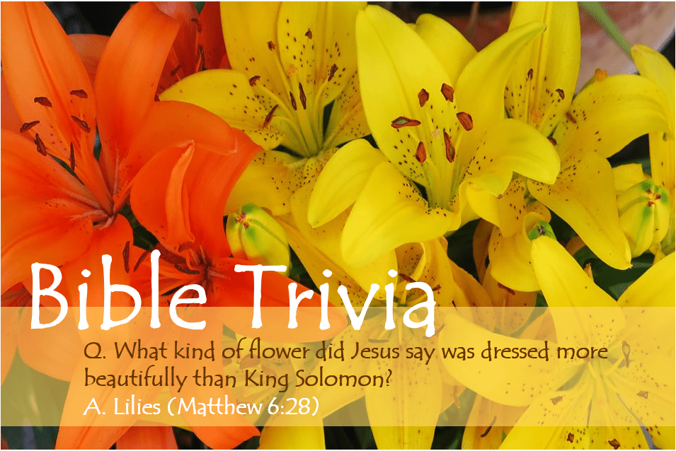 Bible Trivia 307 Capture