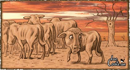Stray-Cattle-2